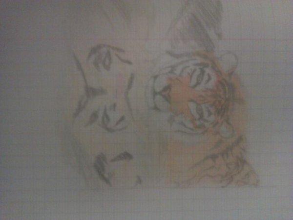 Premier tigre dapres foto