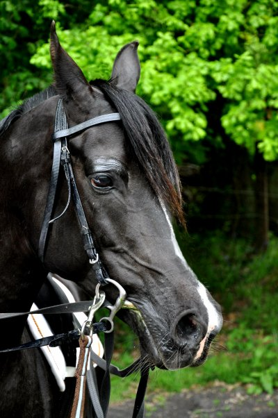 quel est le cheval de vos rêve ?