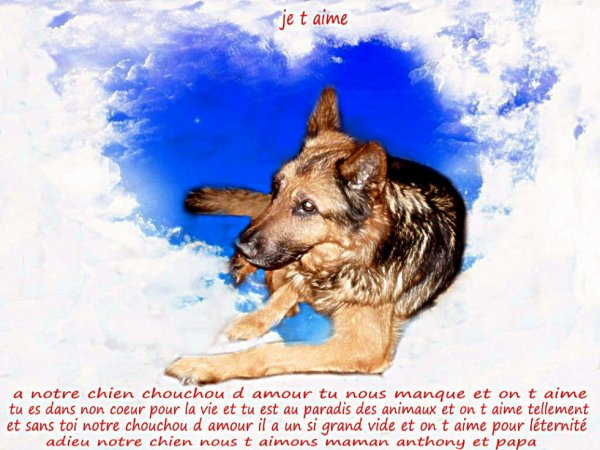 non chien qui est au paradis adieu je t aime