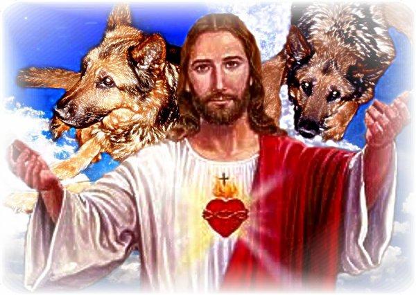 non chien qui est au paradis des animaux je t aime et adieu notre chouchou d amour je t aime et adieu tu es au ciel je t aime