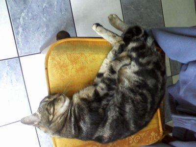 Voici mon chat de 3ans et demi