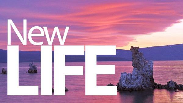 Le début d'une nouvelle vie.