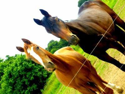 # On me dit souvent ce n'est qu'un cheval, et moi je préfère ne pas répondre, Car il ne comprendrait pas.. ♥ #