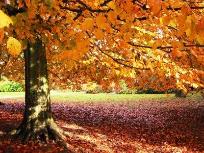 Top 5-  Tendencias de Outono