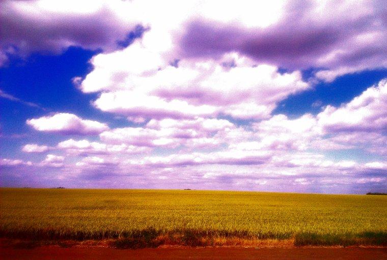 Chants des blés, VII.