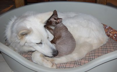 CHAT & CHIEN : AMOUR FUSIONNEL !!!...