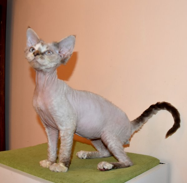 CHATONS DISPONIBLES AU CARAMY :