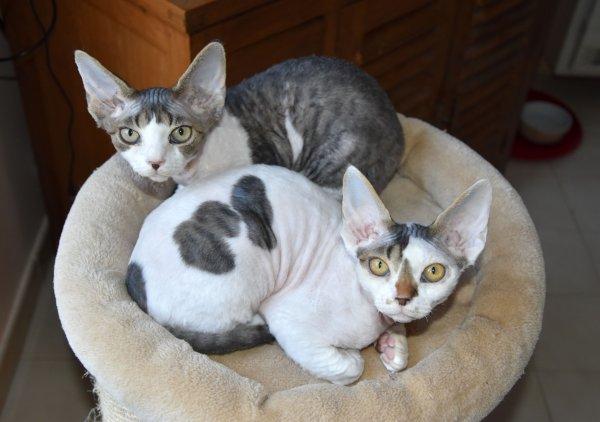 Mes 4 chatons disponibles et décision Arrêt élevage en 2020