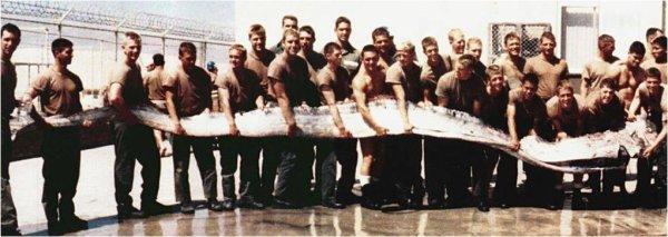 Un régalec ou poisson ruban de 11 m et 272 kilos.
