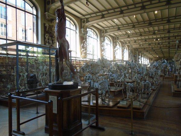 Visite au Jardin des Plantes à Paris