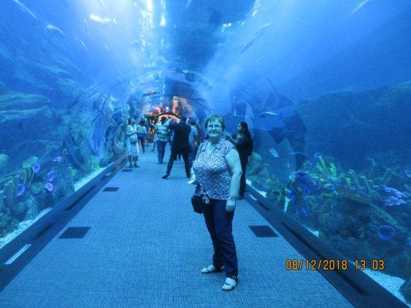 """Suite DUBAÏ - Le Mall du Burj Kahlifa - Centre commerciale géant , du jamais vu , avec aquarium , cascades , patinoire pour noel etc La France est représentée par deux """"TUBES"""" Citroen"""
