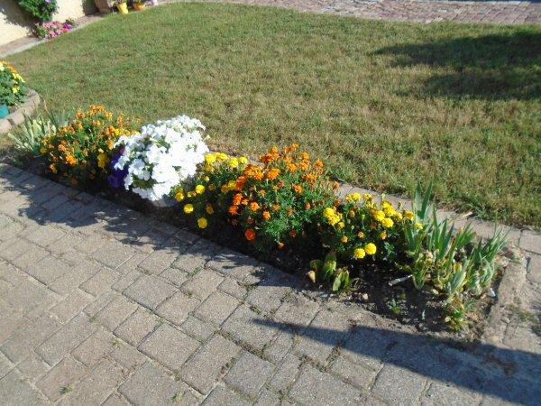 Etat de fleurissement début sept.....