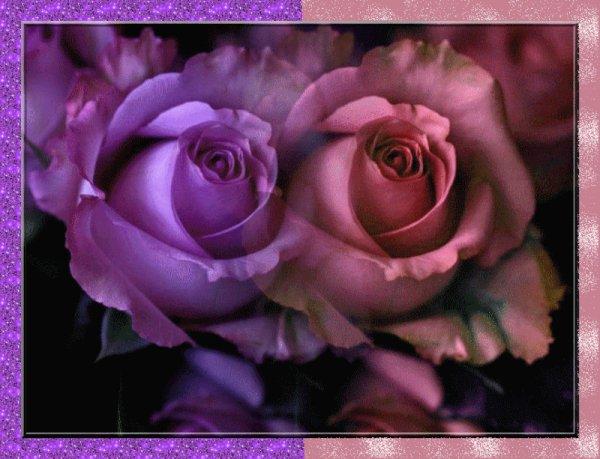 J'adore ls roses <3