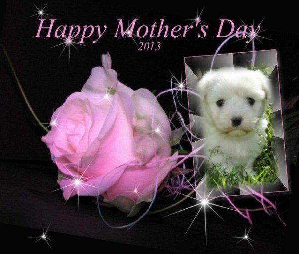 Ce dimanche 12 mai n'oubliez pas la fête des mamans ,le 24 pour la France.