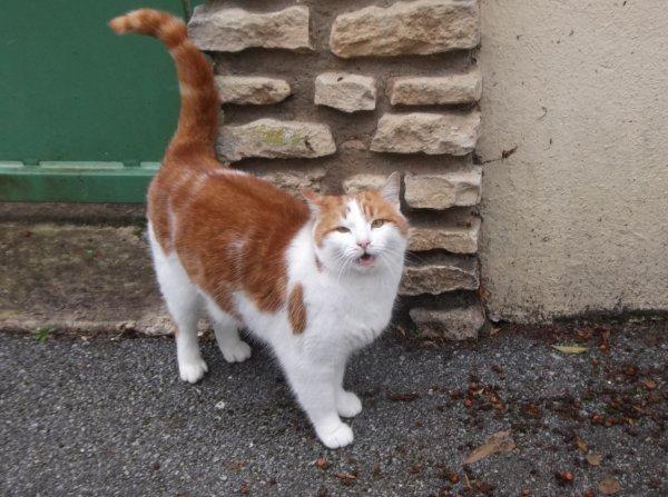 Un joli petit chat roux acte 3