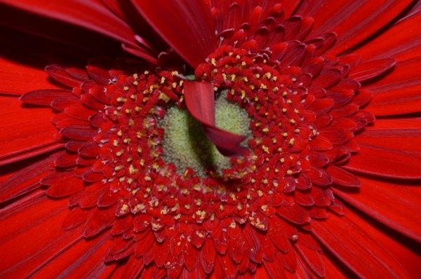 C½ur de fleur (3/4)