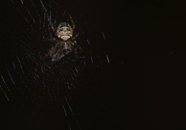 Une jolie petite araignée (2/2)