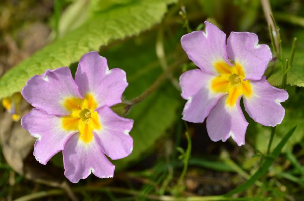 Deux belles fleurs