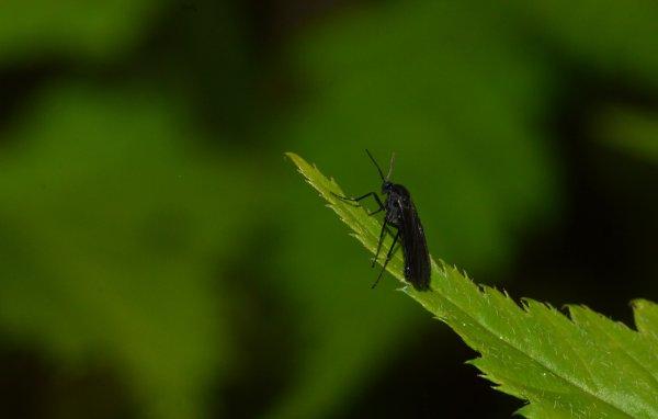 Un insecte au bout de sa feuille (1/2)