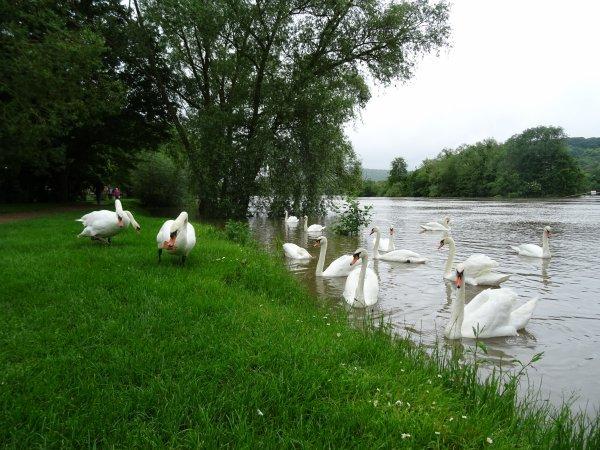 Vernon inondation juin 2016 (4/97)
