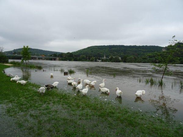 Vernon inondation juin 2016 (41/97)
