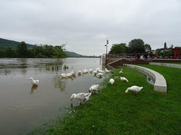 Vernon inondation juin 2016 (42/97)