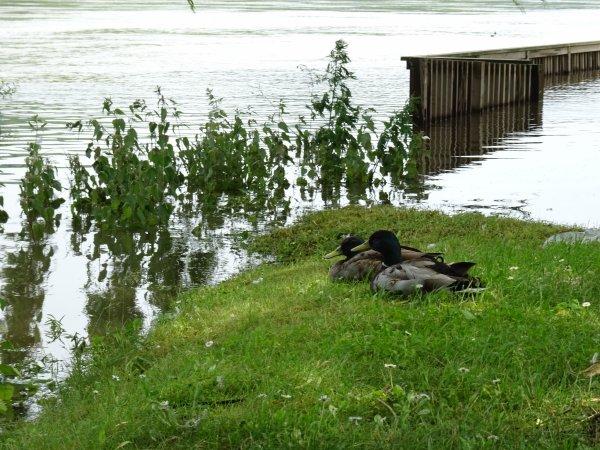 Vernon inondation juin 2016 (79/97)