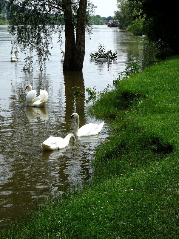 Vernon inondation juin 2016 (87/97)