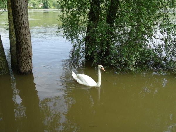 Vernon inondation juin 2016 (88/97)