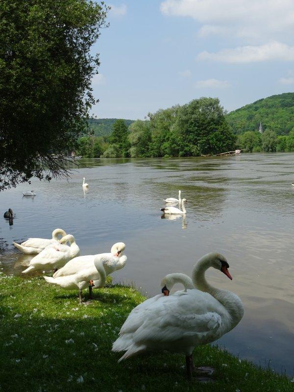Vernon inondation juin 2016 (96/97)