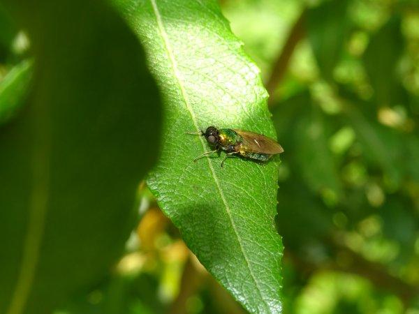 Un petit insecte