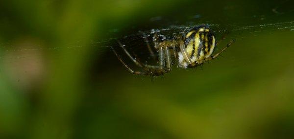 Une araignée sur sa toile (2/2)