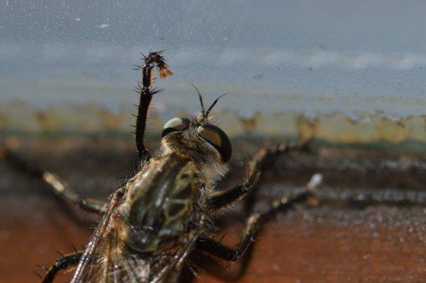 Drôle d'insecte