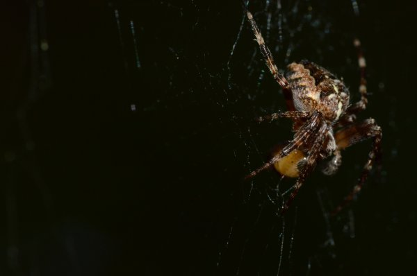 Une belle araignée (1/2)