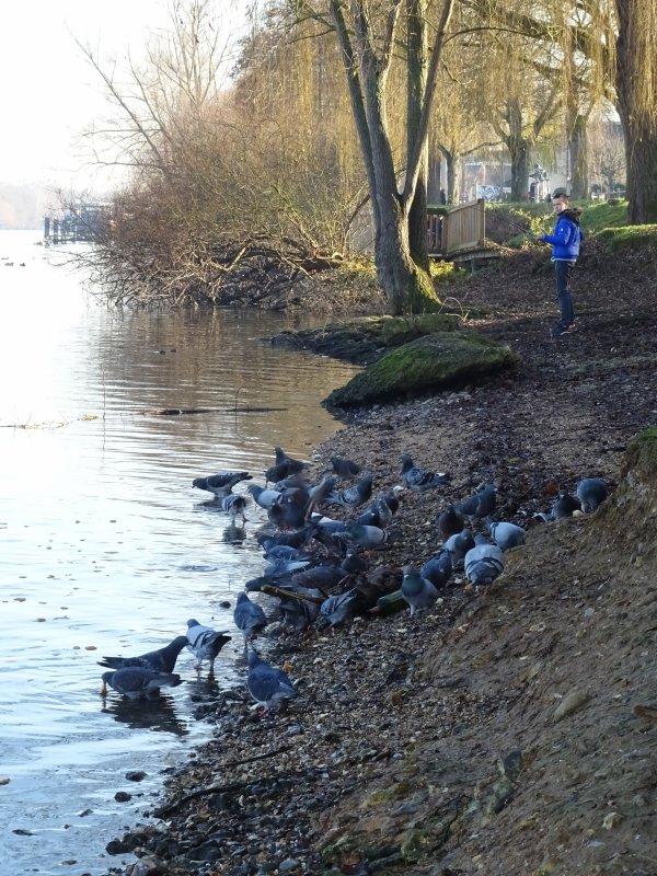 Les beaux pigeons !!!