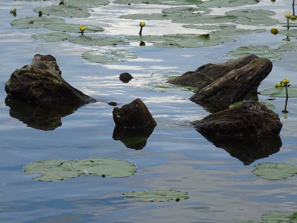 Un tronc d'arbre dans l'eau