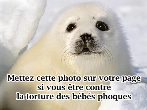 Maltraitance envers les animaux
