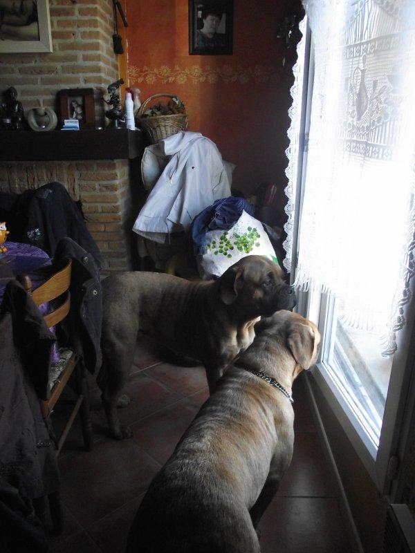 enkara et gabanna tjr collé à la fenêtre que des curieuse