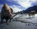 Photo de surlaterredesdinosaures