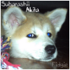 Subarashii-Akita