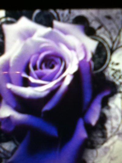 Une fleur mauve... Jaime tellement cette fleur elle représente l'espoire pour moi