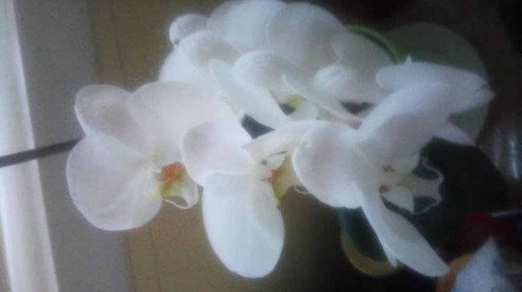 Les 7 orchidées