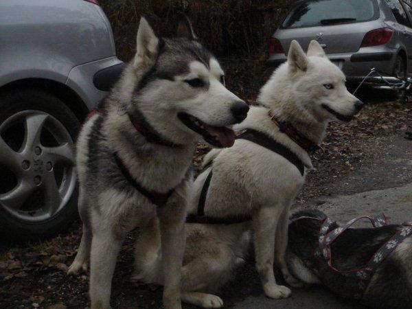 30 janvier denis et ses 2 loups sont venu nous faire un coucou!!