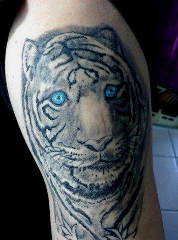 tigre D'ANTHO