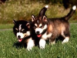 les deux autre chien de mes reve