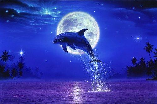 Voici un dauphin!