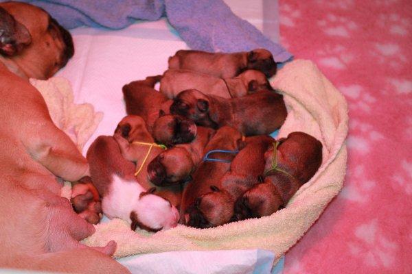 les bébés de Dory et  Déclic sont nés!
