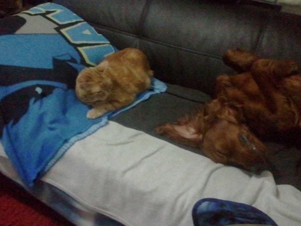 notre chat et Stan