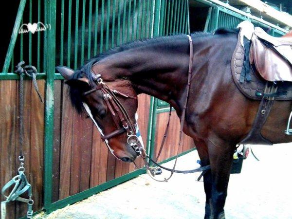 Mon cheval ♥ !