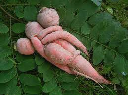 Insolite....les légumes !